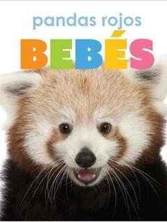 Pandas rojos bebés