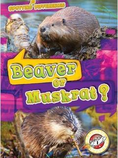 Beaver or Muskrat?
