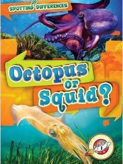 Octopus or Squid?