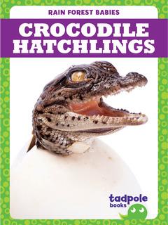 Crocodile Hatchlings