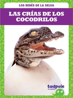 Las crías de los cocodrilos