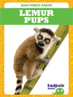 Lemur Pups