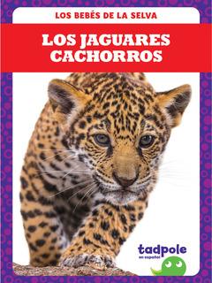 Los jaguares cachorros