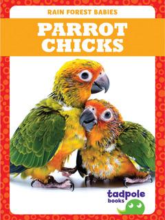 Parrot Chicks