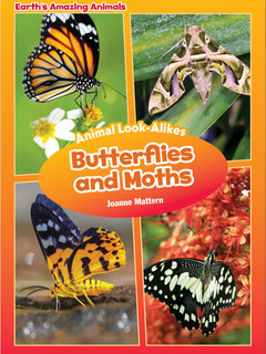 Animal Look-Alikes: Butterflies and Moths