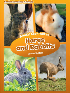 Animal Look-Alikes: Hares and Rabbits