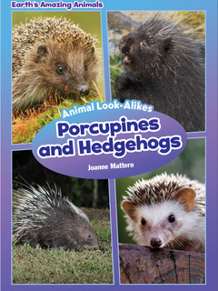 Animal Look-Alikes: Porcupines and Hedgehogs