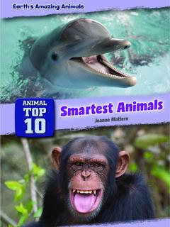 Animal Top 10: Smartest Animals