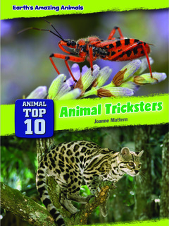 Animal Top 10: Animal Tricksters