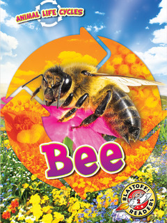 Animal Life Cycles: Bee