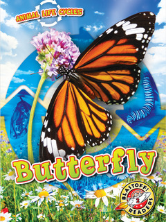 Animal Life Cycles: Butterfly