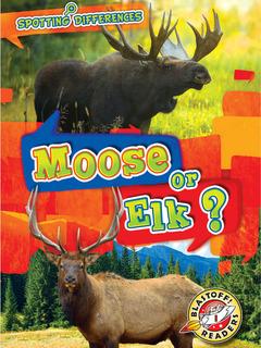 Moose or Elk?