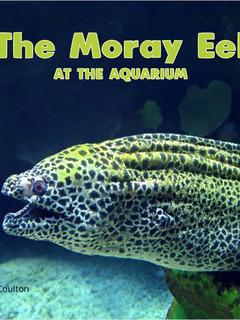 The Moray Eel at the Aquarium
