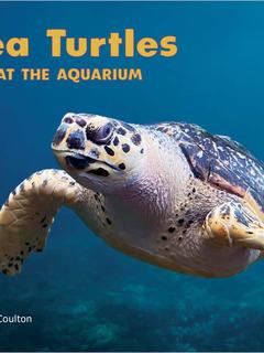 Sea Turtles at the Aquarium