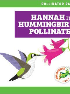 Hannah the Hummingbird Pollinates