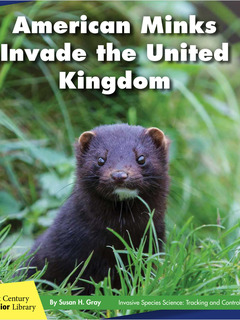 American Minks Invade the United Kingdom