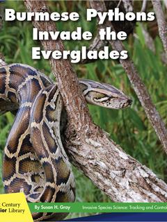 Burmese Pythons Invade the Everglades