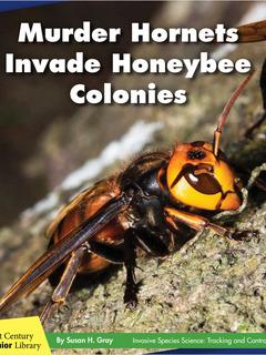 Murder Hornets Invade Honeybee Colonies