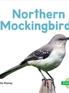 Northern Mockingbirds