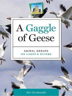 Gaggle of Geese: Animal Groups on Lakes & Rivers