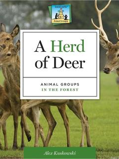 Herd of Deer: Animal Groups in the Forest