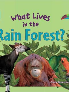 What Lives in the Rain Forest?