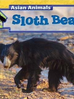 Sloth Bears