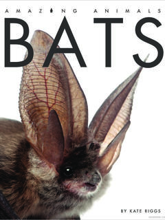 Amazing Animals: Bats