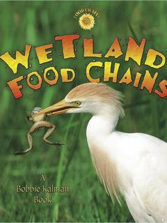 Wetland Food Chains