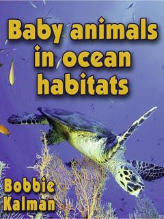 Baby animals in ocean habitats