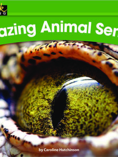 Amazing Animal Senses!