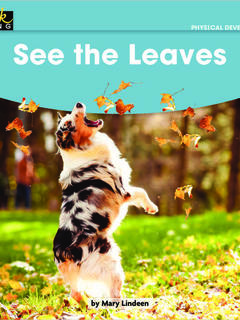 See the Leaves