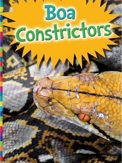 Boa Constrictors