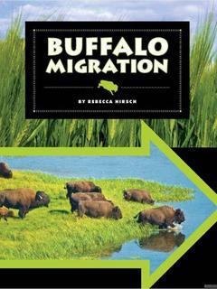 Buffalo Migration