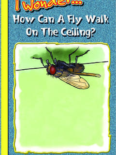 How Can a Fly Walk on the Ceiling?