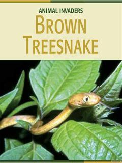 Brown Treesnake