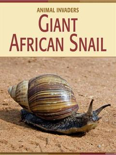 Giant African Snail