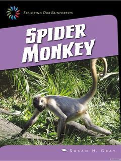 Spider Monkey