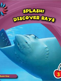 Discover Rays